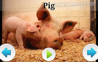 Best domestic animals sounds