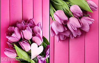 Pink tulips live wallpaper