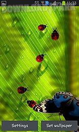 friendly bugs