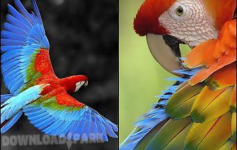 Talking parrot free lwp