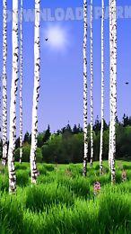 birch wood landscape