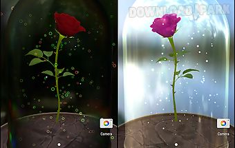 Enchanted rose 3d