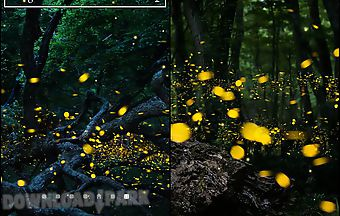 Fireflies by top live wallpapers..