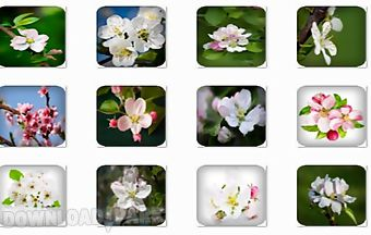 Apple blossom onet classic game