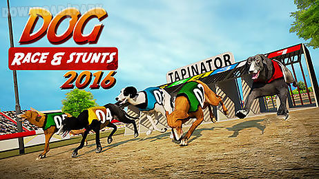 dog race and stunts 2016