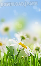 flower spring live wallpaper