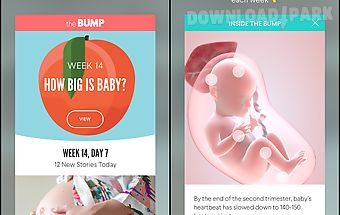 The bump pregnancy tracker