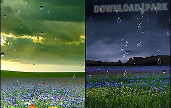 Spring rain by locos apps