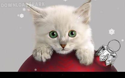 x-mas cat