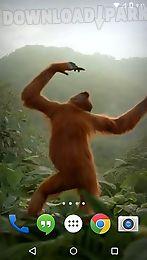 dancing monkey