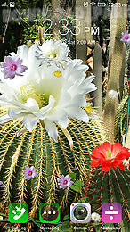 The Description Of Cactus Flowers Wonderful Cacti Will Break Into Directly On Screen Your Device Live Wallpapers Are Completed With