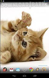 playful ginger kitten