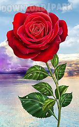 rose. magic touch flowers