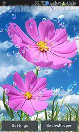 summer rain: flowers