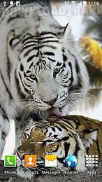 tiger by amax lwps