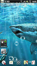 sharks live wallpapers
