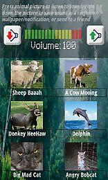 animal noises animal pictures