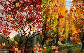 Nature: changing leaf