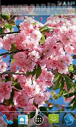 amazing spring flowers