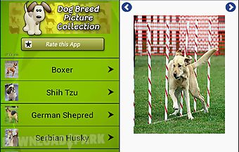 Dog breeds pictures and photos