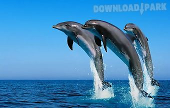 Dolphins wallpapers aa