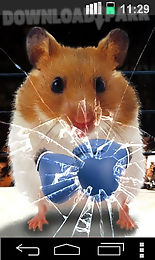 funny hamster cracked screen