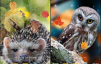 Autumn by blackbird wallpapers