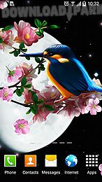 sakura and bird