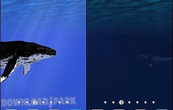 Ocean: whale