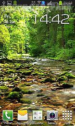 wonderful forest river