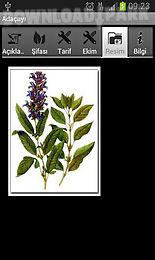Şifalı bitkiler