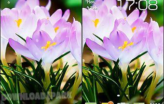Spring flowers: rain