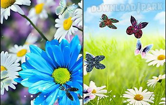 Daisies by live wallpapers 3d