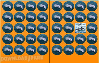 Dolphins memory game free
