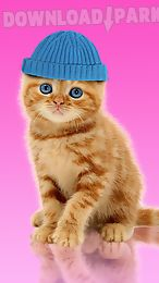 sweet cat. dress up wallpaper