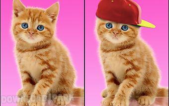 Sweet cat. dress up wallpaper